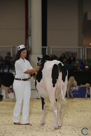 Royal16_Holstein_L32A3613