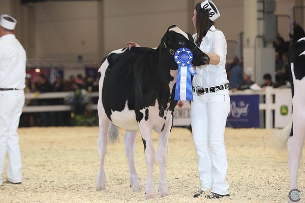 Royal16_Holstein_L32A3711
