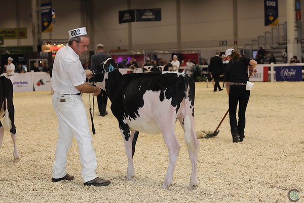 Royal16_Holstein_1M9A9499