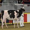 Royal16_Holstein_1M9A9859