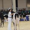Royal16_Holstein_L32A3617