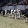Royal16_Holstein_L32A3805
