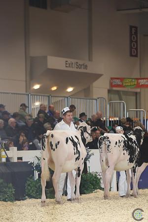 Royal16_Holstein_L32A3721