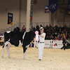 Royal16_Holstein_1M9A9689