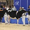 Royal16_Holstein_L32A3738