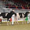Royal16_Holstein_1M9A9864