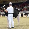 Royal16_Holstein_L32A3818