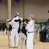 Royal16_Holstein_L32A3649