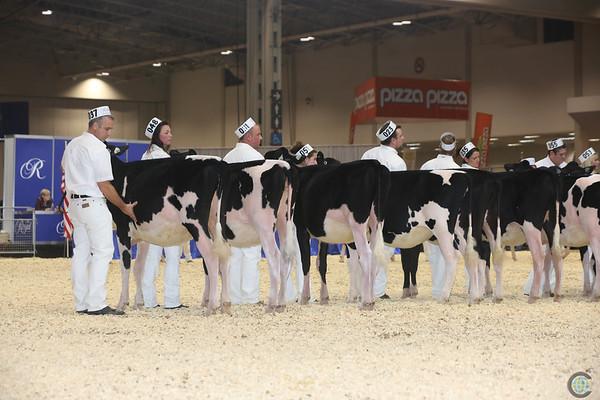 Royal16_Holstein_L32A3661