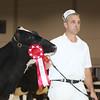 Royal16_Holstein_L32A3705