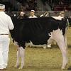 Royal16_Holstein_1M9A9852