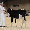 Royal16_Holstein_1M9A9520