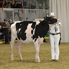 Royal16_Holstein_1M9A9873