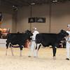 Royal16_Holstein_1M9A9688