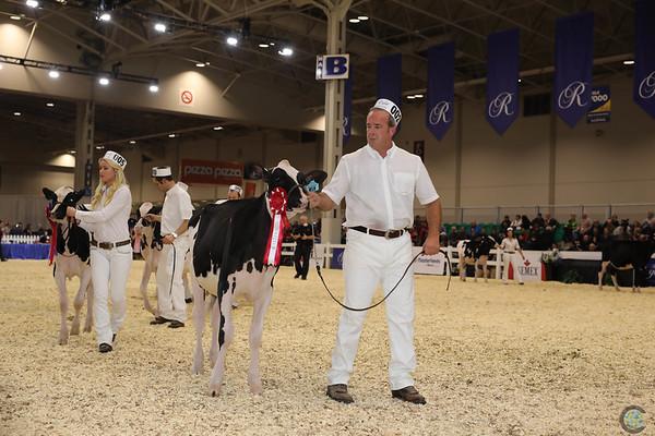 Royal16_Holstein_1M9A9553