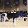 Royal16_Holstein_1M9A9680