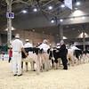 Royal16_Holstein_1M9A9549