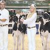 Royal16_Holstein_L32A3562
