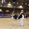 Royal16_Holstein_1M9A9567