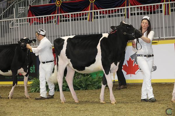 Royal16_Holstein_1M9A9882