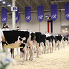 Royal16_Holstein_1M9A9595