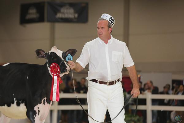 Royal16_Holstein_L32A3592