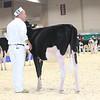Royal16_Holstein_L32A3633