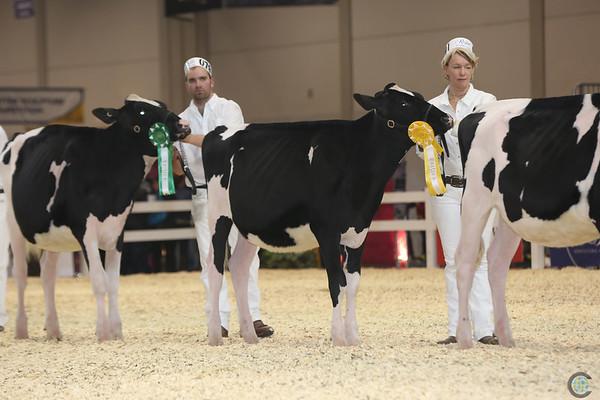 Royal16_Holstein_L32A3801