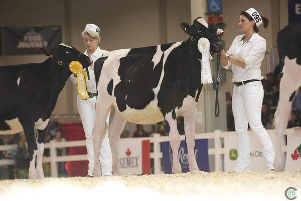 Royal16_Holstein_L32A3799