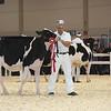 Royal16_Holstein_L32A3786