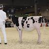 Royal16_Holstein_1M9A9514