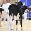Royal16_Holstein_L32A3625