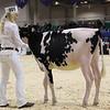 Royal16_Holstein_1M9A9506