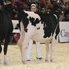 Royal16_Holstein_L32A3729