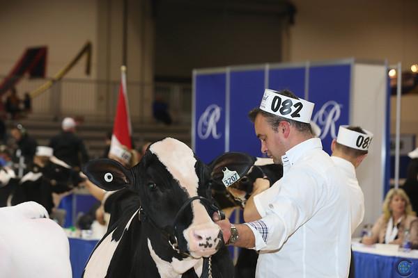Royal16_Holstein_L32A3731