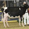Royal16_Holstein_1M9A9878