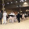 Royal16_Holstein_1M9A9550