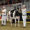 Royal16_Holstein_1M9A9855