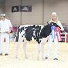 Royal16_Holstein_L32A3596