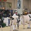 Royal16_Holstein_L32A3728