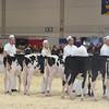Royal16_Holstein_L32A3584