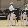 Royal16_Holstein_L32A3581