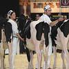 Royal16_Holstein_L32A3764