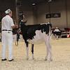 Royal16_Holstein_1M9A9501