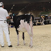 Royal16_Holstein_1M9A9496