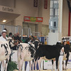Royal16_Holstein_L32A3722