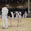 Royal16_Holstein_1M9A9513