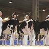 Royal16_Holstein_L32A3670