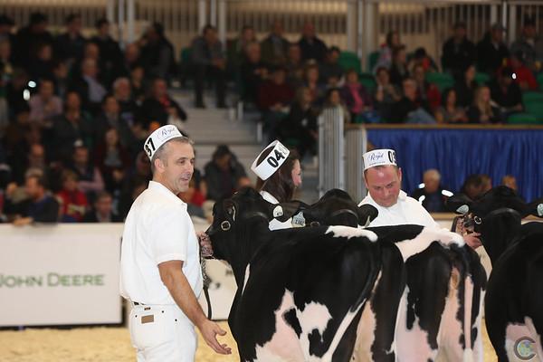 Royal16_Holstein_L32A3688