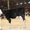 Royal16_Holstein_1M9A9583